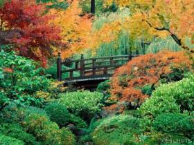 japanesegarden.jpg